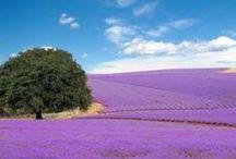 Crafting - Lavender