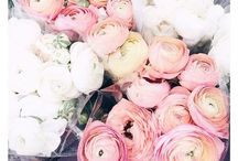 Blooms / Flowers and florals