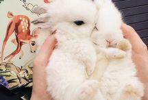 Bunnies!!! / I love the Bunnies