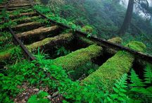 Abandoned places / Beauty that has been left untouched