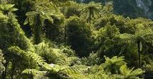 NZ Native Plants, Trees, Flowers. / Native flora of Aotearoa NZ, some introduced species