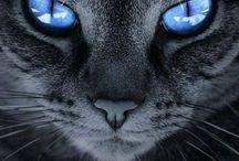 Meowwwww / Kitty's