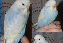 Birds / by Sabrina Bond