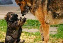 Dogs / by Elaine Fleureton