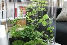 Terrarium and container gardening / by Linda R