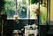 old spaces / greenery