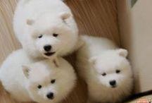 adorable little fluff balls