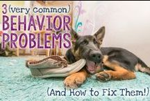 Dog Behavior Tips / Tips for dog owners to help deal with behavior issues in their dog.
