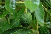 Avocado / Fab ways to LOVE avocado. Dietitians top picks for delish, simple, healthy ideas.