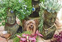 Beautiful Green Gardens / Gardens