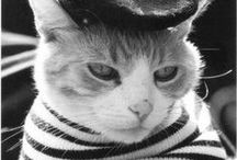 Котик. Чашка Чая. Черно-Белая Версия. / О котиках, чае и книжках :3