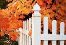 Fences / There's just something about a great fence surrounded by great landscaping that I love.