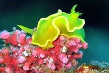 Love nudibranches