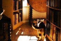Books / We read to know that we are not alone. (William Nicholson)  Lesen bedeutet, sich einen Vorteil gegenüber dem Leben und der Zeit zu verschaffen. (James Runcie)