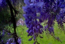 Pretty Flowers and Gardens / by Stefany McClain