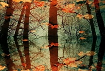 Autumn / by Stefany McClain