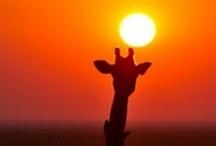 ~Sunsets.