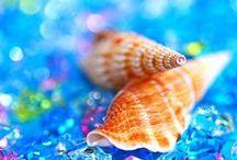 **Tam's Shell Shack** / by Beachhousetreasures