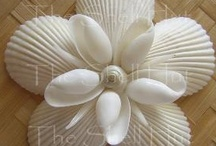 Shell Craft / Seashell Crafts