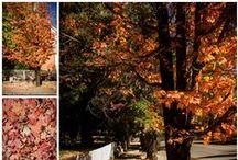 Nevada City Fall Colors / Fall colors in Nevada City, California