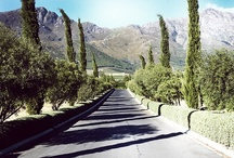 Scenes from the Winelands