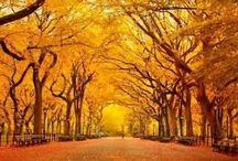 Autumn scenes / Visions of Autumn - A celebration of the season...
