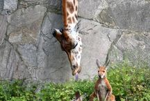God's Beautiful Zoo / animals <3 / by Arielle Good