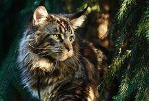 Кото-вдохновение / О вдохновении в котах, кошках и котятах.   Без слов.