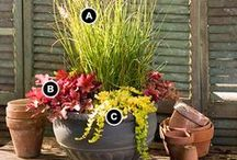 Garden: Container Gardening