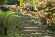 Home: Landscaping Ideas