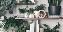 Plants in home / Green aspect of life to boost your home decor.
