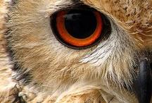 Owl's world / Un mondo tutto gufoso