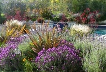California Native /Drought & Heat Resistant Plants / by F Kane