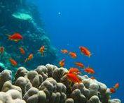 Egypte, Croisière B.D.E. / B.D.E… surnommée « Triangle d'Or » par les plongeurs en raison de la qualité de ses spots, cette croisière en Mer Rouge est principalement destinée aux plongeurs amateurs de tombants vertigineux et de pélagiques.  Trois lettres qui annoncent une croisière plongée mémorable lors de laquelle vous verrez le meilleur des fonds sous-marins de la Mer Rouge !