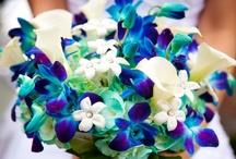 My dream flowers