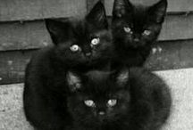 black cats and kittens