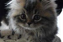 Tenerezze di pelo / Gatti e cani teneri e coccolosi