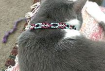 My Oddball Handmade Cat Collars / My handmade cat collars! Made from friendship bracelets and feature a safety breakaway collar design. For sale in my Etsy shop.