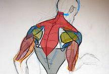 Anatomia, portami via