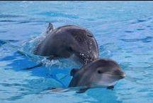 Delfini / Delfini