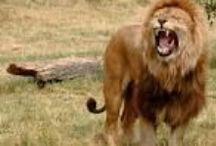 Zwierzęta Świata / najmniejsze, największe,najdziwniejsze i inne naj...