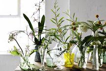 - g r e e n  a t  h o m e - / Florals and plants at home