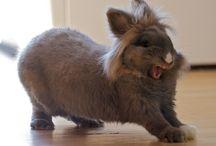 Bunny / Söpöjä