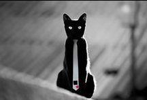 Cats & Ties