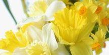 Wiosna(spring)