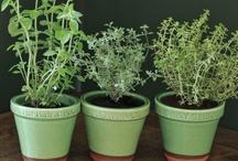 herbs / https://www.facebook.com/RebeccaYoxallArt