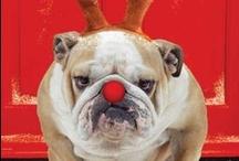 ♥ Christmas ♥