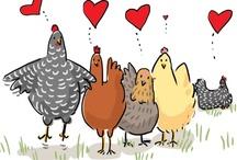 Kury też są miłe :P