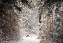Winter Wonderland❄️ / Because winter is beautiful