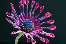 FLORES EXÓTICAS / Flores de singular belleza y colorido. Agradezco no bajar más de 5 pines por día.  Do not pin more than 5 pins per day. Thanks.